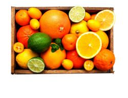 Gastronomiashop Design Citrus fruit Large Box is a product on offer at the best price